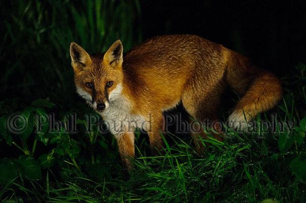 Fox 4522