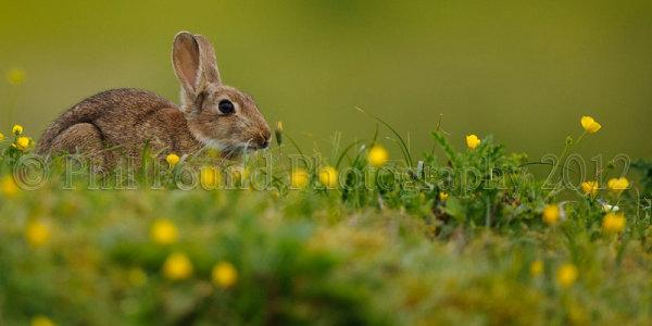rabbit 8990