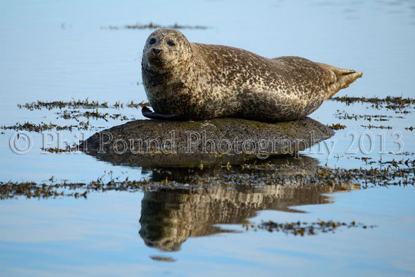 Seal 1758