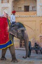 Jaipur Elephant Man