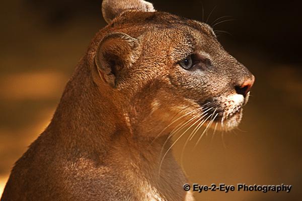 Puma - Young Female