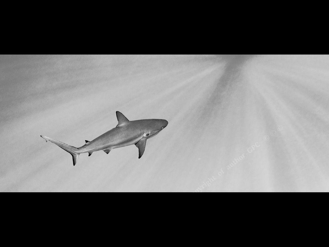 1-Winner Jo Mahy Annual PDI shark