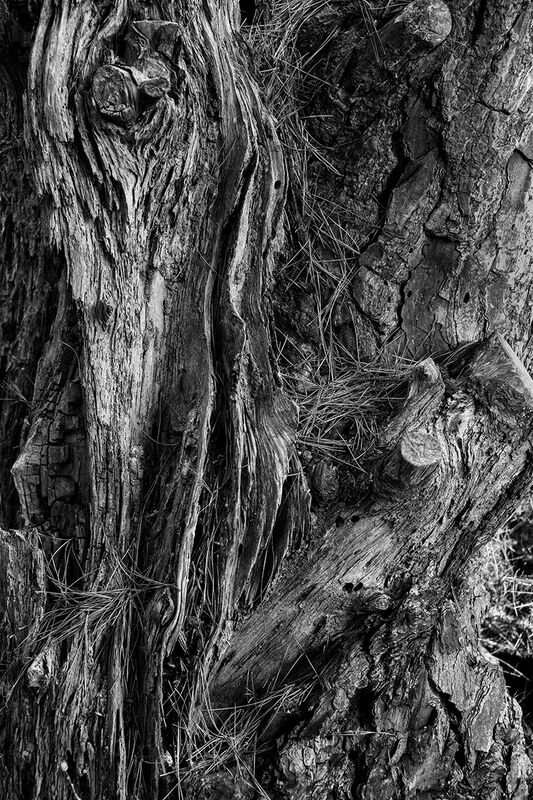1st Anthony Le Conte, Texture, Guet Tree