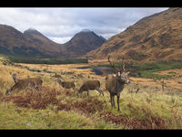 1st Martyn Elliston  Open Glencoe Deer