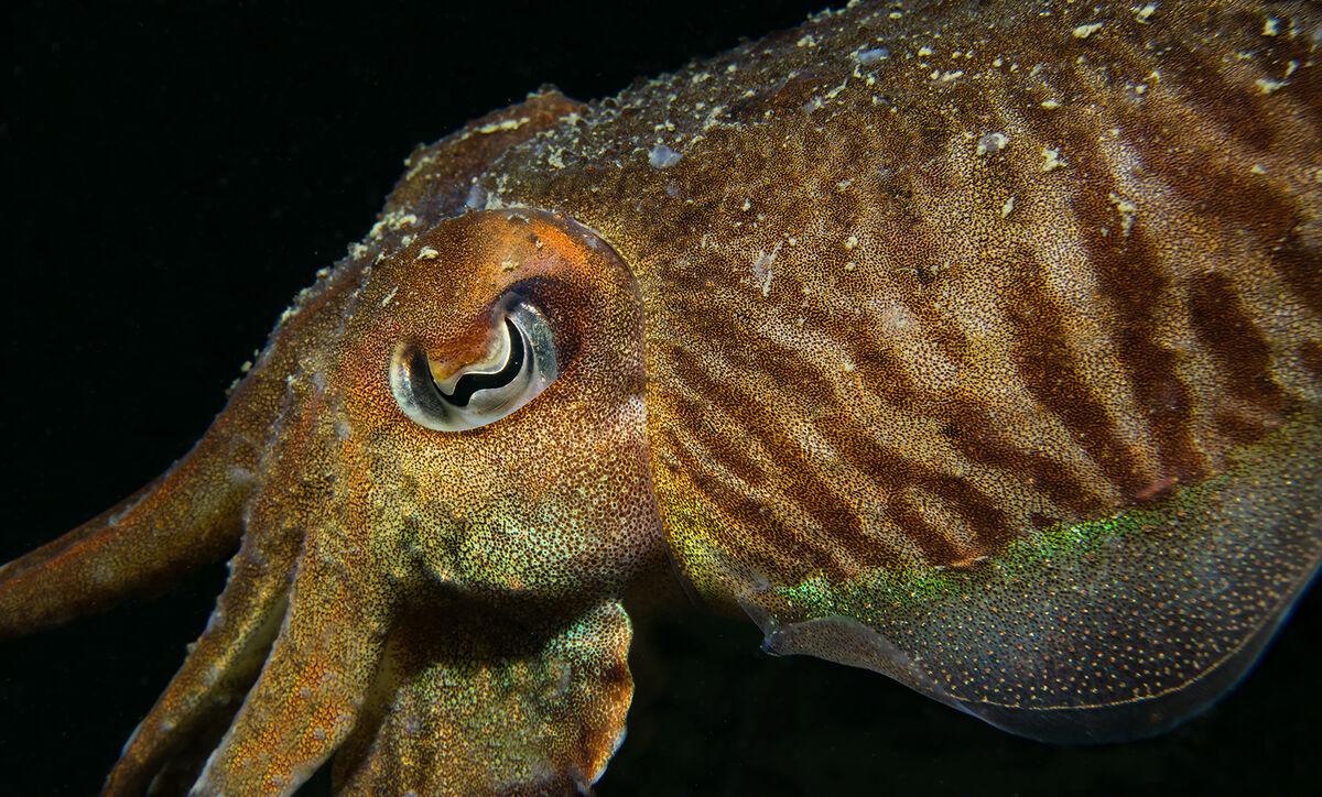 4th= Joanne Mahy , Cuttle Fish Detail