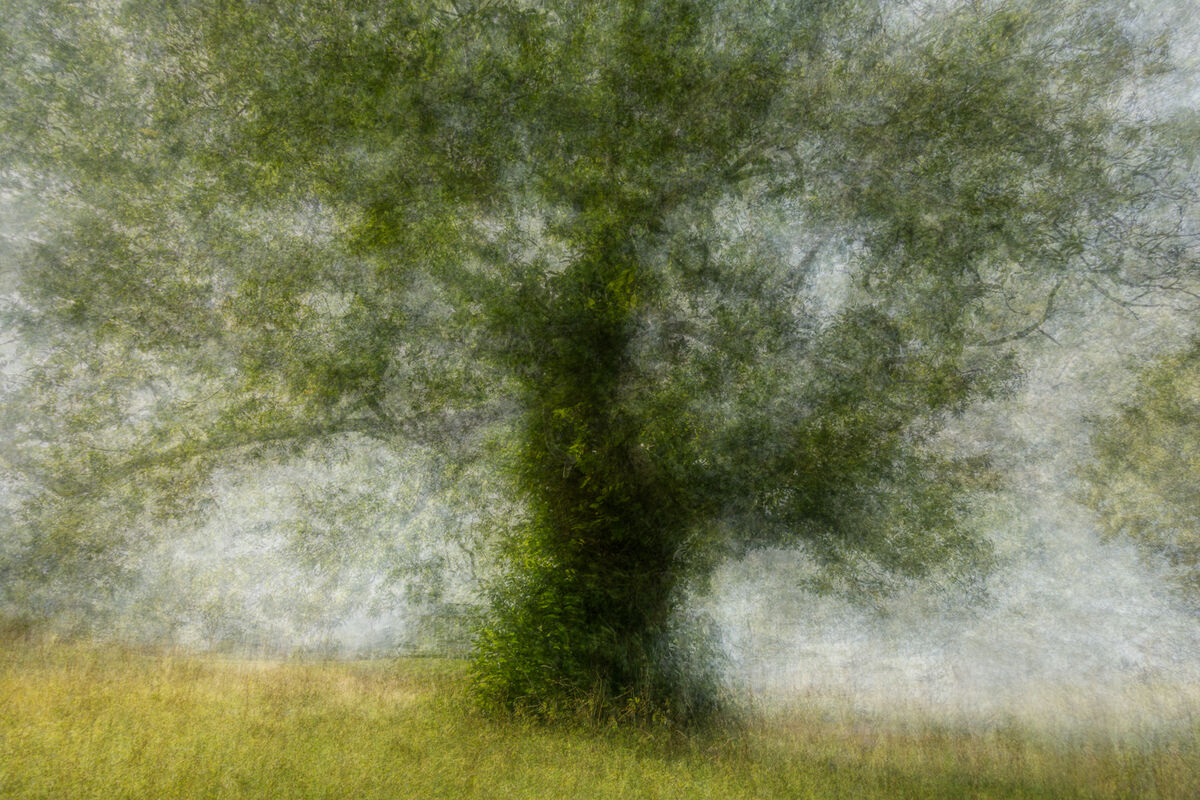 4th= Nigel Byrom ,Open Print, Tree In The Park