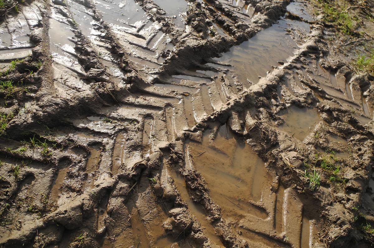 4th= Robin Millard , Patterns, Glorious Mud