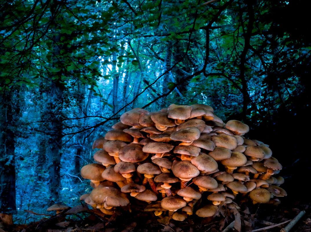 5th= Ben Le Prevost , Fairy Tale Fungi