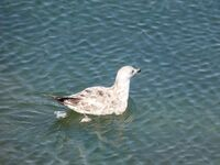 Abigail Panganayi ,Macro-Closeup, Bird Enjoying Water