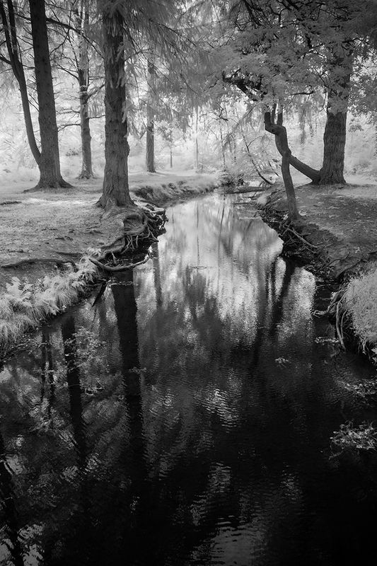 Anthony Le Conte The New Forest