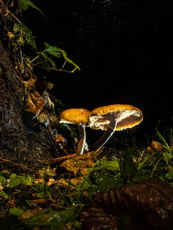 Ben Le Prevost , Mushrooms