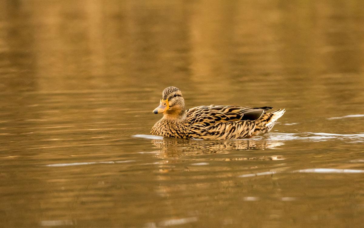 Berni Kerrigan , Winged Animals, On Golden Pond