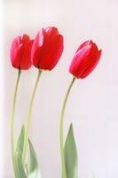 Brian Johnson ,Red-any shade, Three Of A Kind
