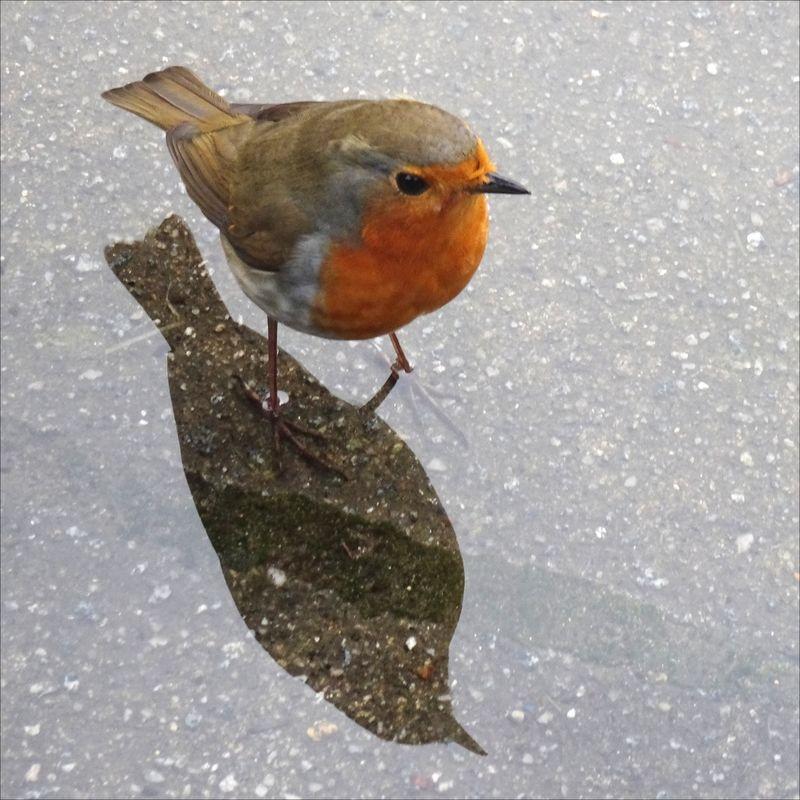 Brian Johnson  , Winter, What No Snow