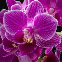 David Le Prevost LRPS,Macro-Closeup, Orchid