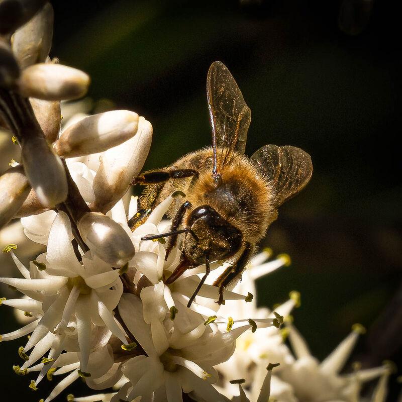 Derek Bridel AFIAP, BPE2,Macro-Closeup, Bee On Palm Tree