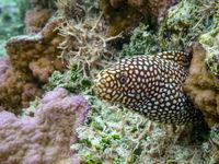 Derek Bridel AFIAP, BPE2 Open Honeycomb Moray Eel