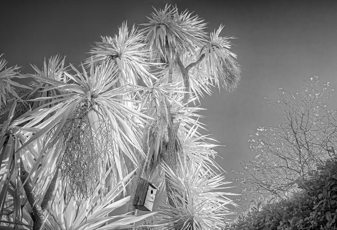 Derek Bridel  AFIAP, BPE2,In Your Garden, Palm Box