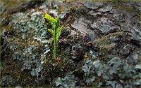 Derek Tostevin DPAGB, BPE1,Nature, New Life On Fallen Tree