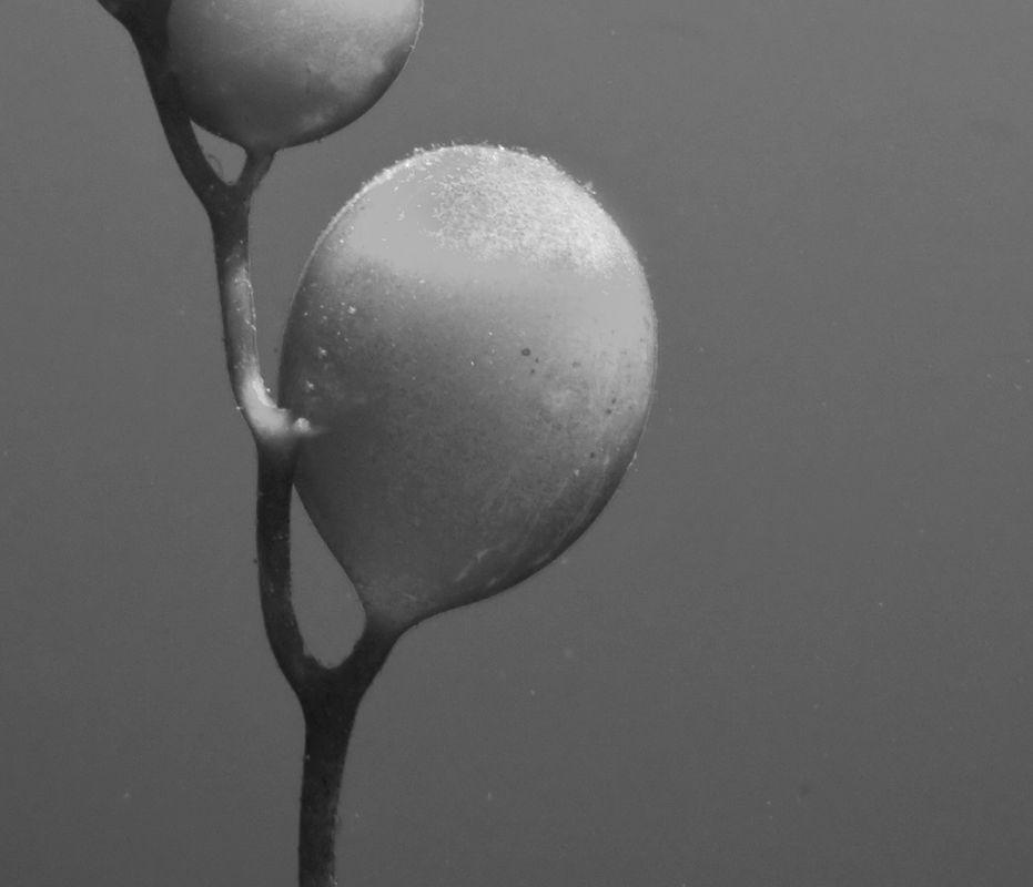Joanne Mahy ,What Is It, Kelp