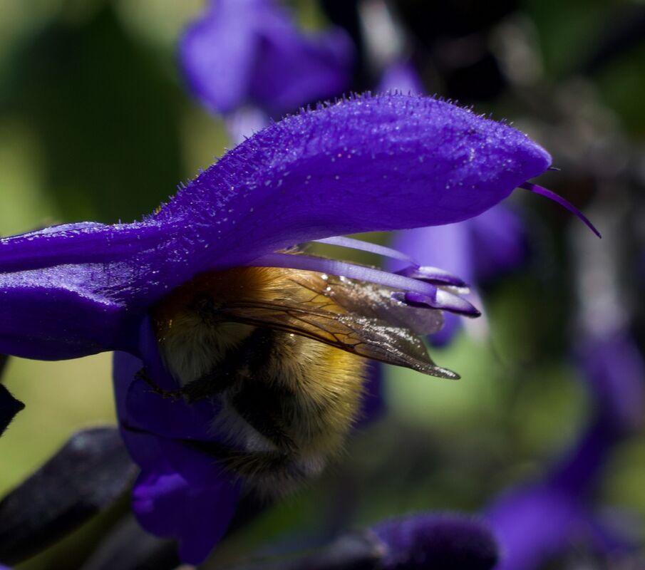 John Johnson , Bee Have
