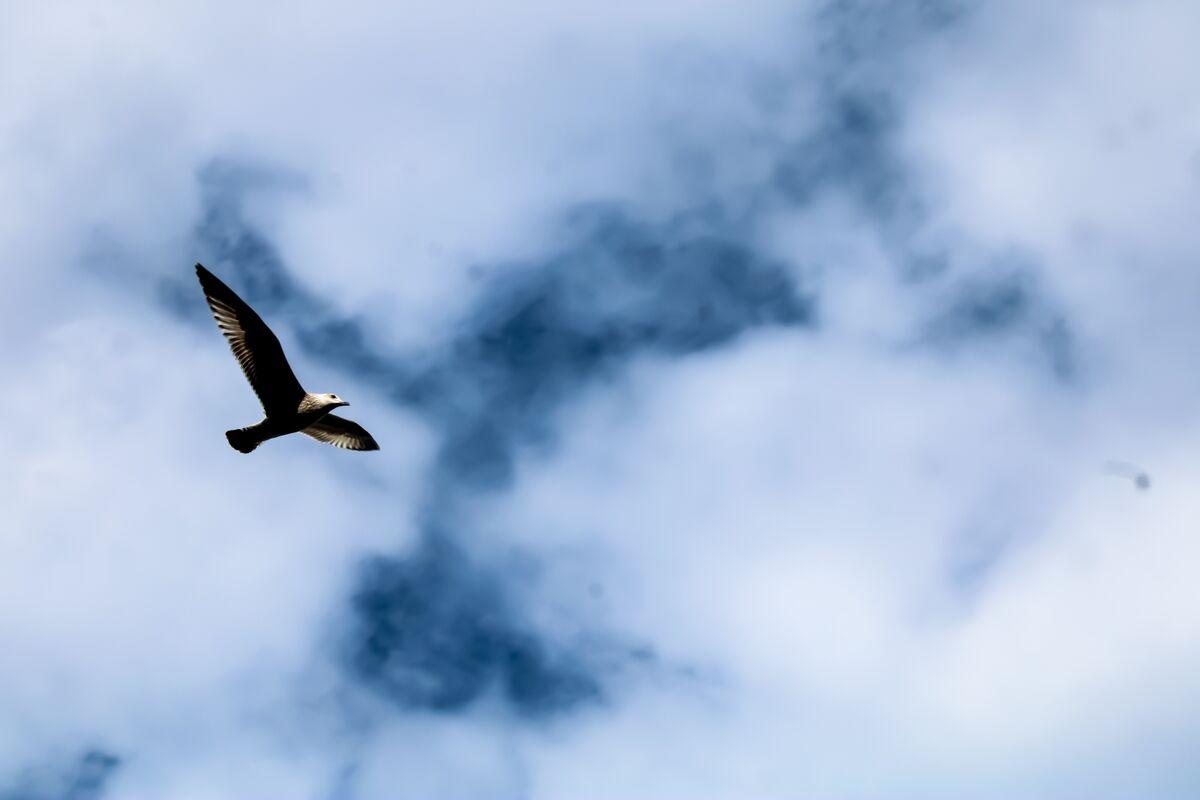 Julian Mamabolo ,Minimal, Cloudy Bird