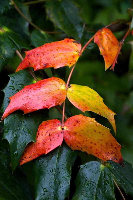 Martyn Elliston LRPS,Autumn Colours, Autumn Leaves