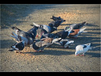 Martyn Elliston , Odd One Out, Birds