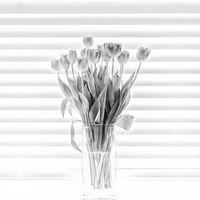 Nigel Byrom Open(Square Format) Fourteen Tulips