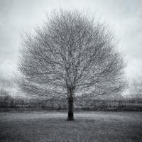 Nigel Byrom ,Open 2021 PDI, Tree In Winter