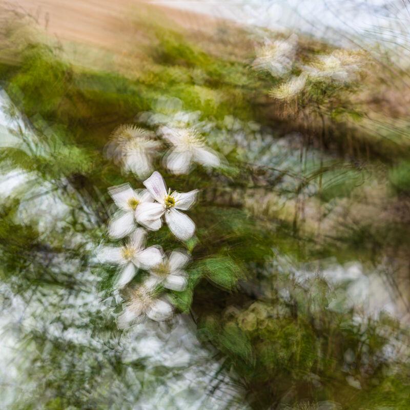 Nigel Byrom  ,In Your Garden, Clematis Montana On Pergola