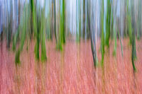Nigel Byrom , Movement, Woodland