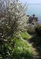 Robin Millard ,Nature, Sloe Blossom