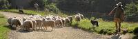 Robin Millard ,Panoramic, Shepherding