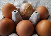 Robin Millard , Odd One Out, Odd Egg