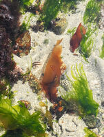 Robin Millard   Aquatic Life, Weed Patern