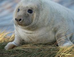 Donna Nook Seal 3