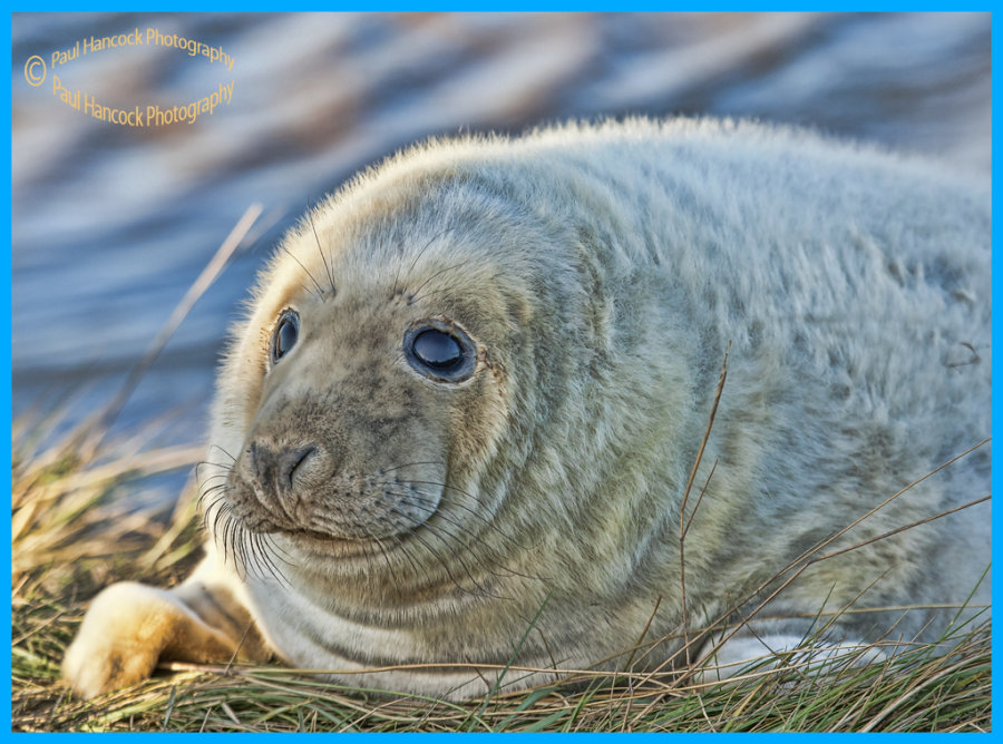 Donna Nook Seal 4