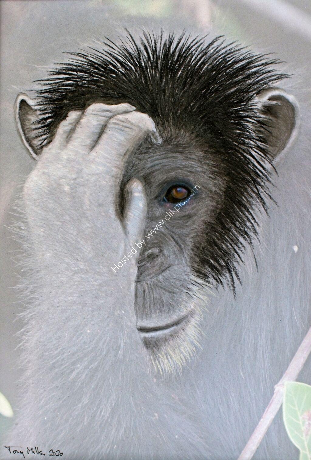 Chimpanzee 1#2