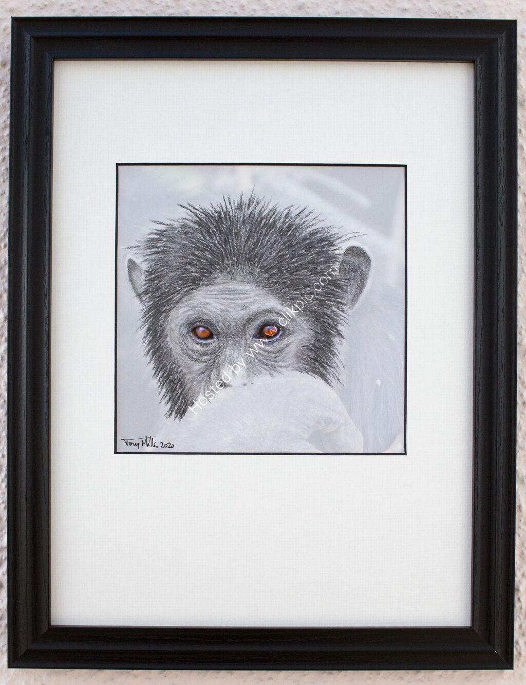 Chimpanzee 2#1 (framed)