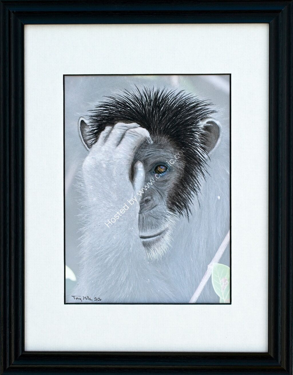 Chimpanzee 1#2 (framed)