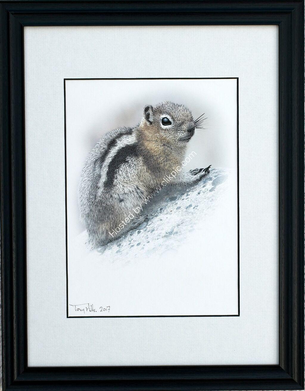 Golden-mantled Ground Squirrel #1