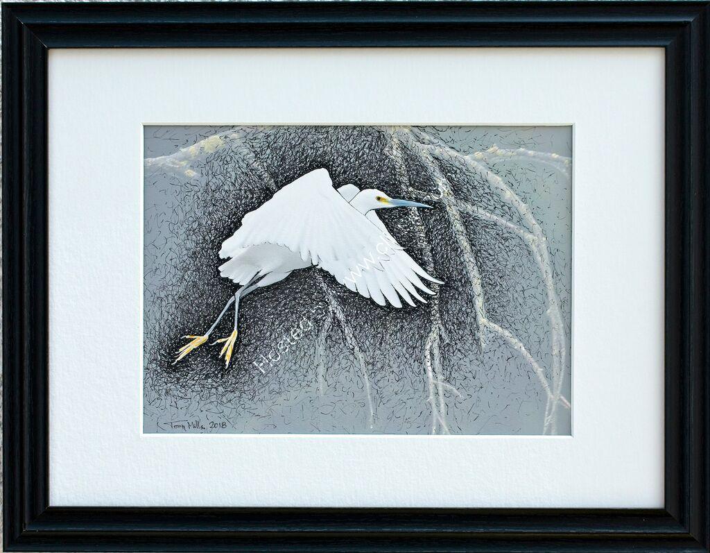 Little Egret Flying #5