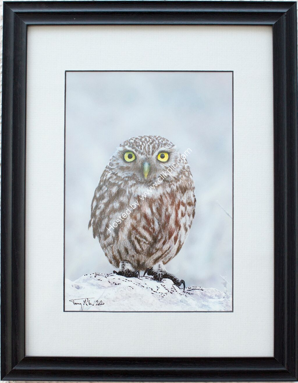 Little Owl #13 (framed)