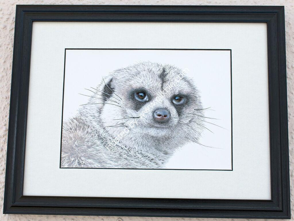 Meerkat 1#4 (framed)
