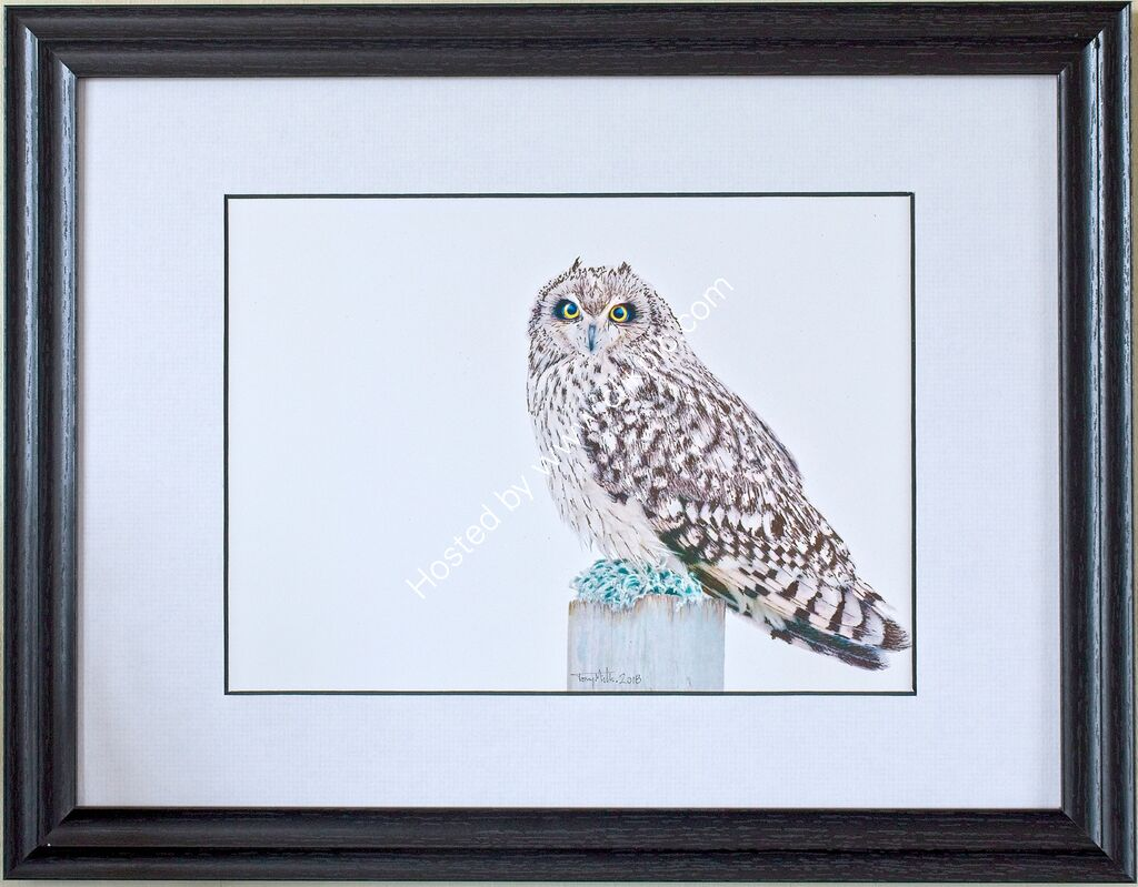 Short-eared Owl #2 (framed)