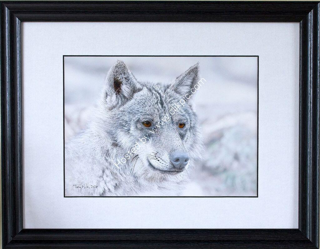 Wolf 1#5 (framed)