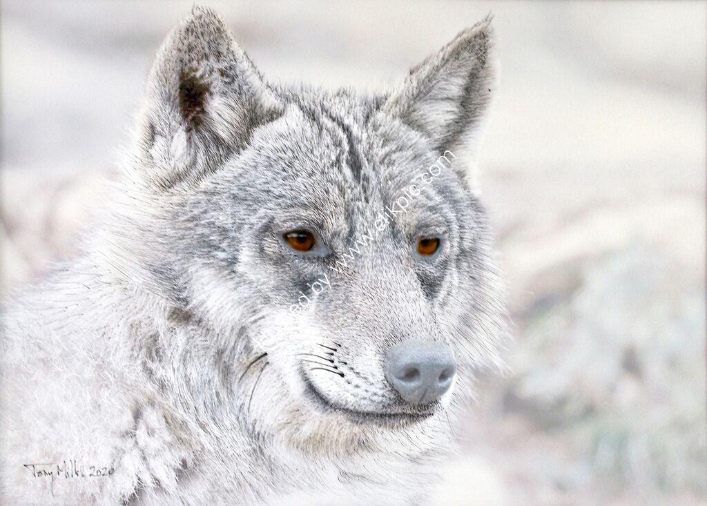 Wolf 1#5