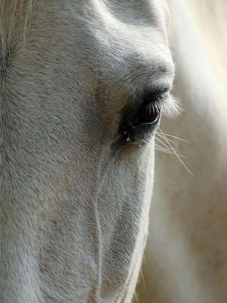 24.Teardrop.Shutterbugs