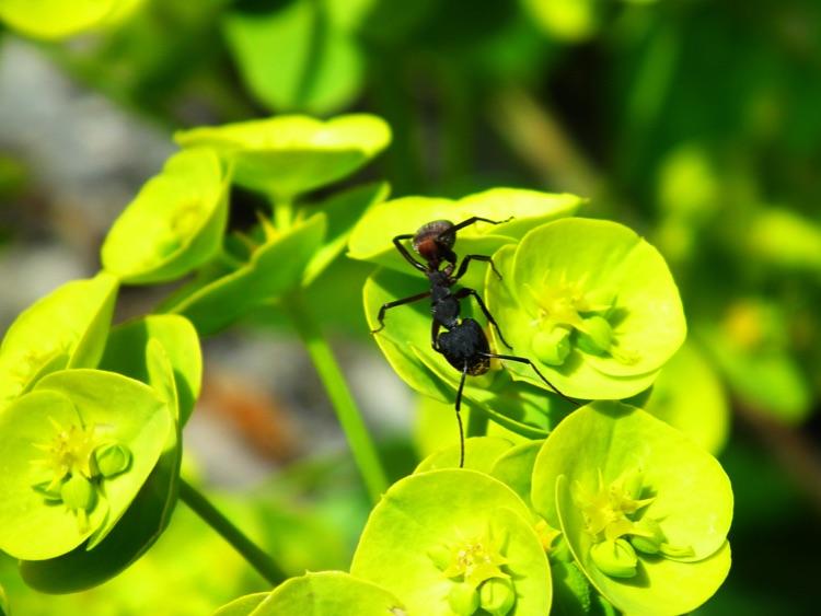 31.Gi-ant.Shutterbugs